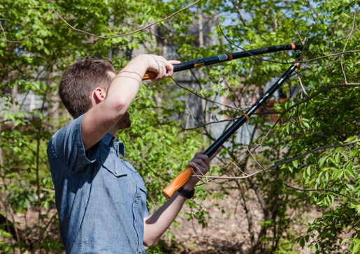 man using garden tools trimming tree branches